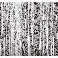 Фотообои виниловые на флизелиновой основе Decocode Белые березы 31-0414-PB 3х2,8 м