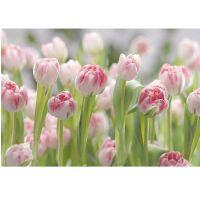 Фотообои бумажные Komar Secret Garden 8-708 3,68х2,54 м