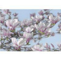 Фотообои бумажные Komar Magnolia 8-738 3,68х2,54 м
