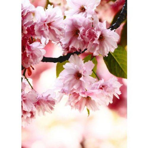 Фотообои виниловые на флизелиновой основе Decocode Цветущая сакура 221-0057-FR 2х2,8 м