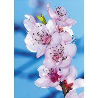 Фотообои виниловые на флизелиновой основе Decocode Весна 21-0227-FL 2х2,8 м